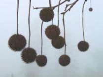 tree seed2