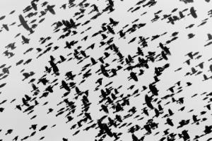 felzmann-swarm rilke