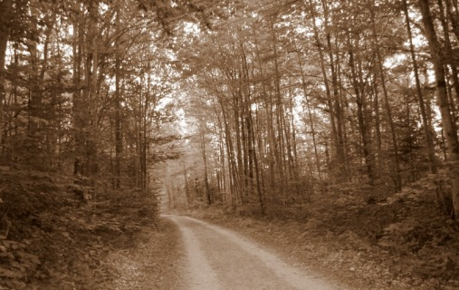 wordless wednesday-woods-trees-long-winding-road-dirt-road